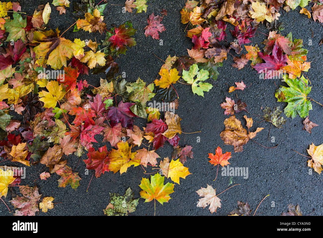 Nasses Herbstlaub liegend auf einem asphaltierten Weg in Birmingham, UK Stockbild