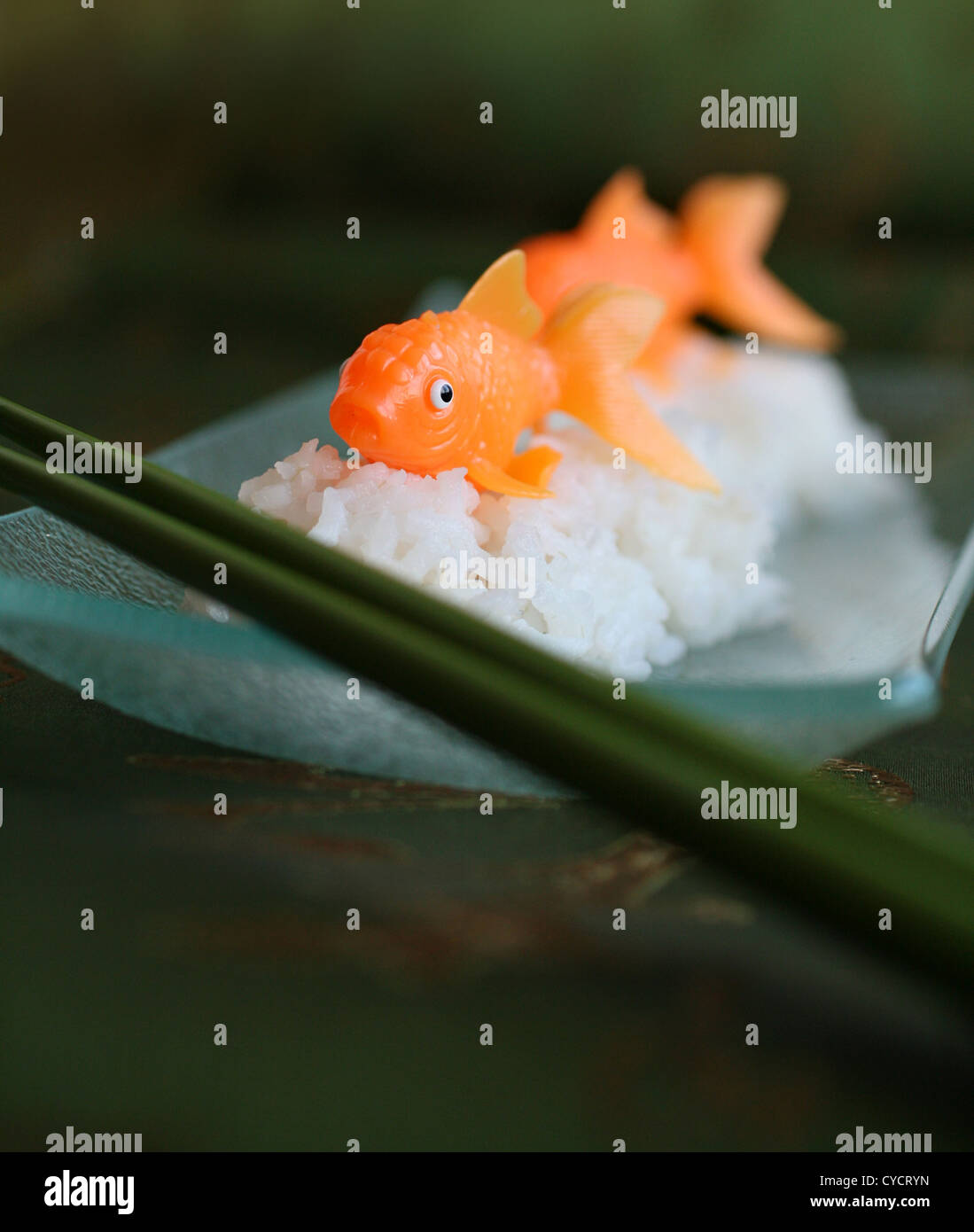 Humor, Skurril, Sushi, Goldfisch Stockbild