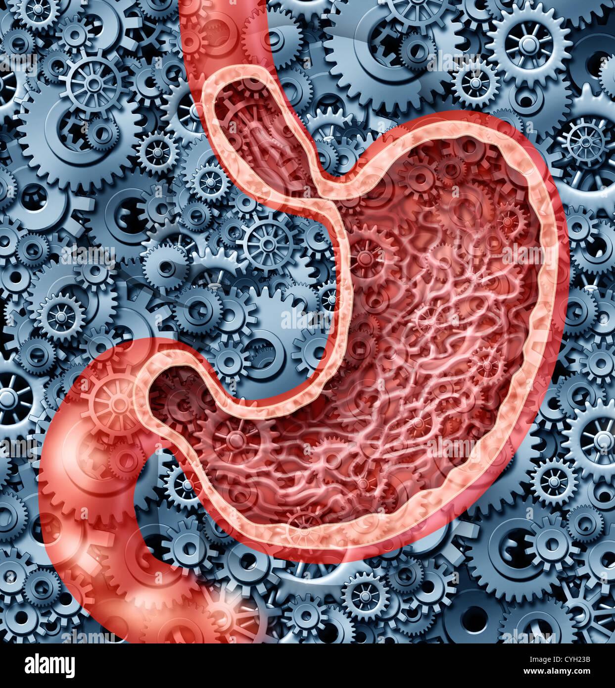Menschliche Verdauung Funktion als ein Magen Anatomie der ...