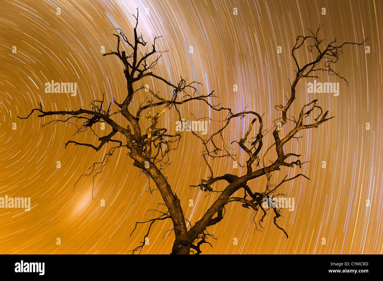 Geisterhafte Baum unter Sternspuren. Stockbild