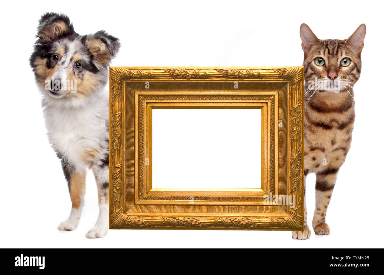 Empty Golden Picture Frame Stockfotos & Empty Golden Picture Frame ...