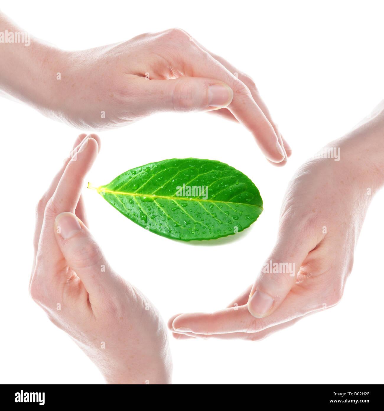 Öko Ökologie oder Umweltschutz Copncept mit Blatt und hand Stockbild