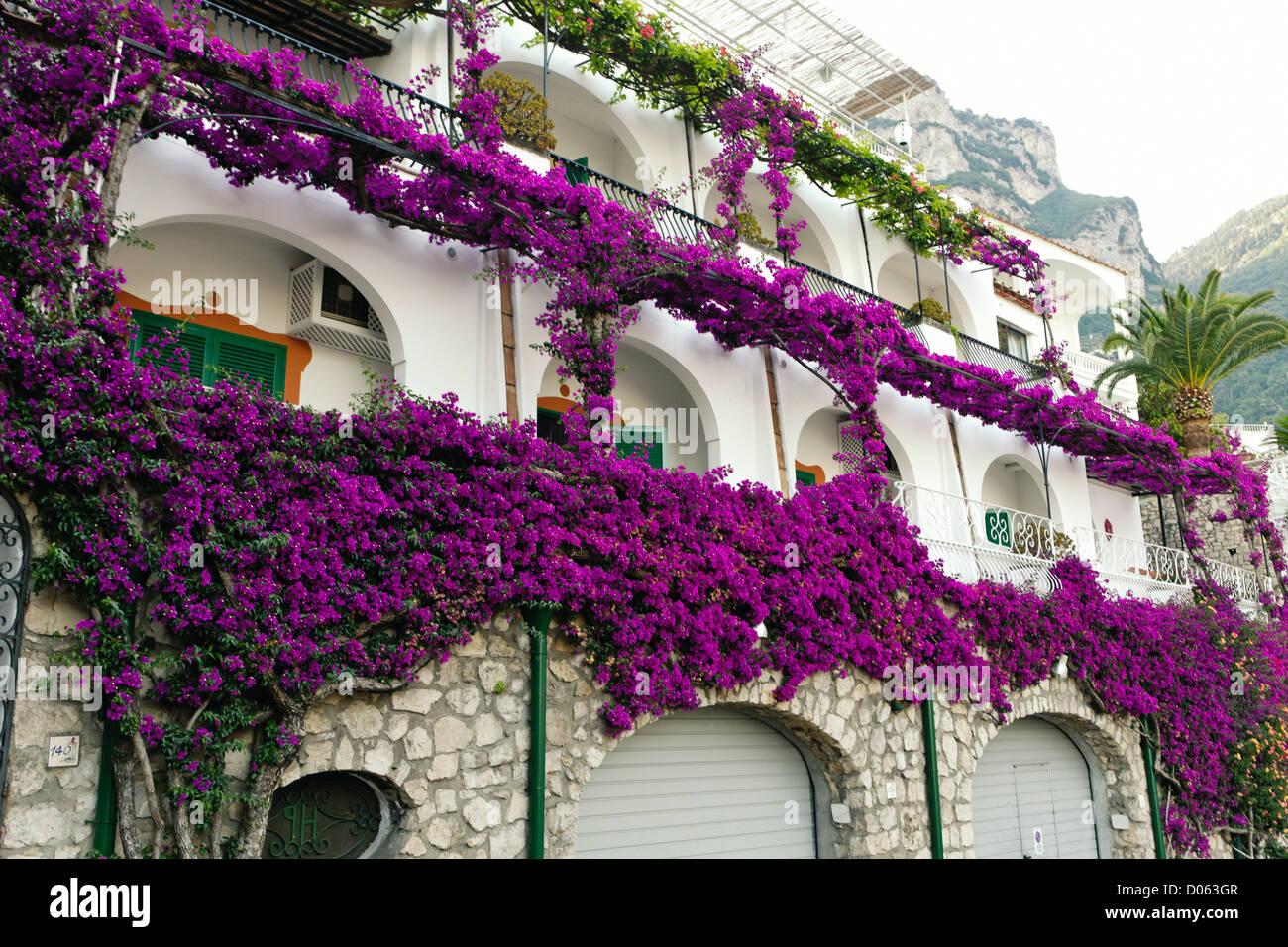 Lila Bluten Bedeckt Hausfassade Hotel Poseidon Positano Kampanien