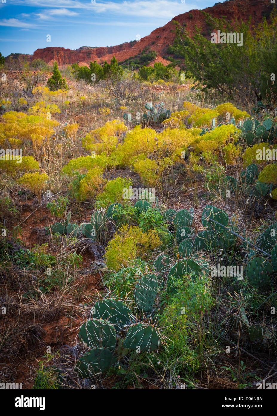 Bodenvegetation Caprock Canyon State Park, Texas Stockbild