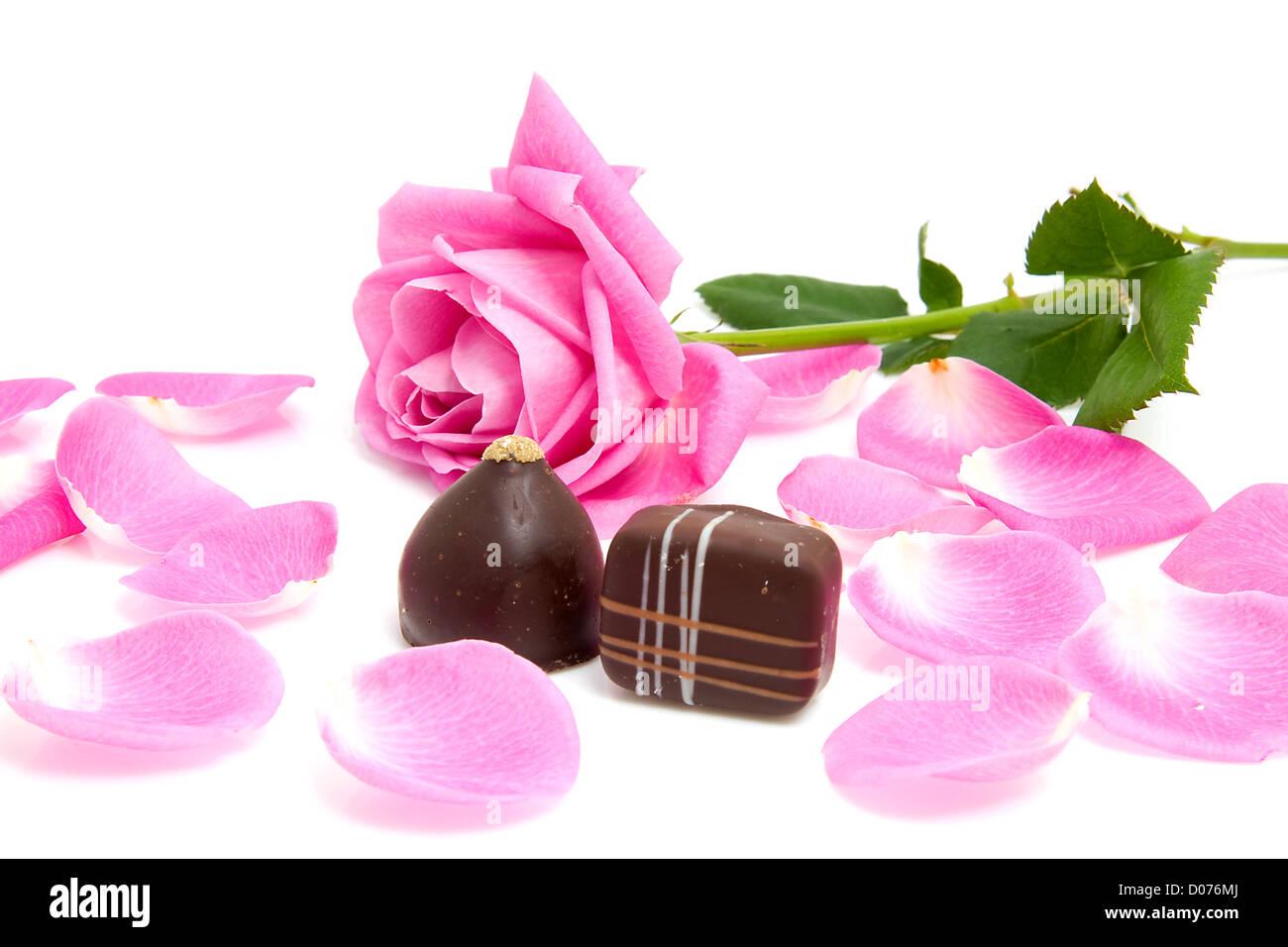 rosa Rose und Blätter mit Schokoladenbonbons zum Valentinstag auf weißem Hintergrund Stockbild