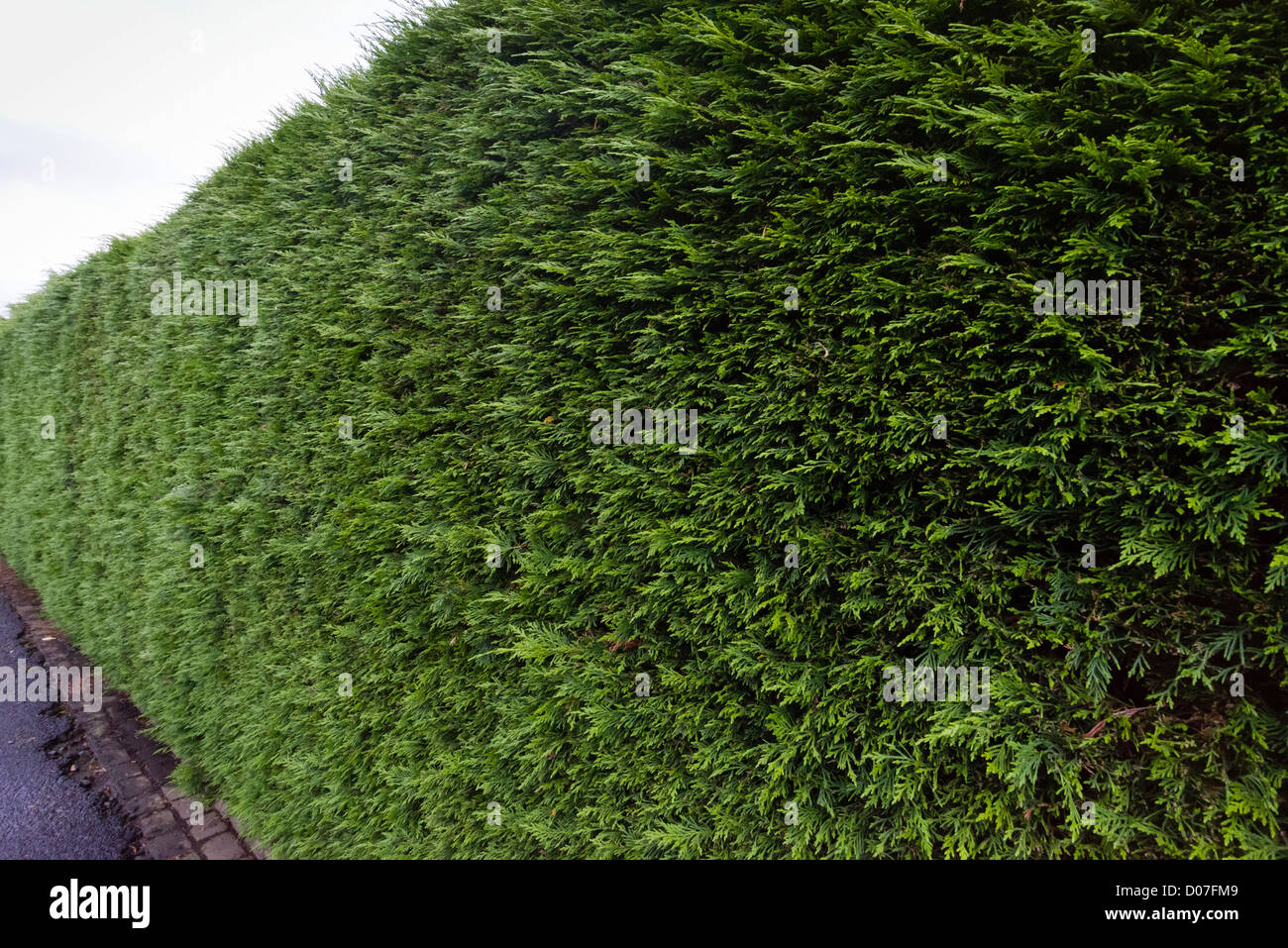 Clipping A Hedge Stockfotos & Clipping A Hedge Bilder Alamy