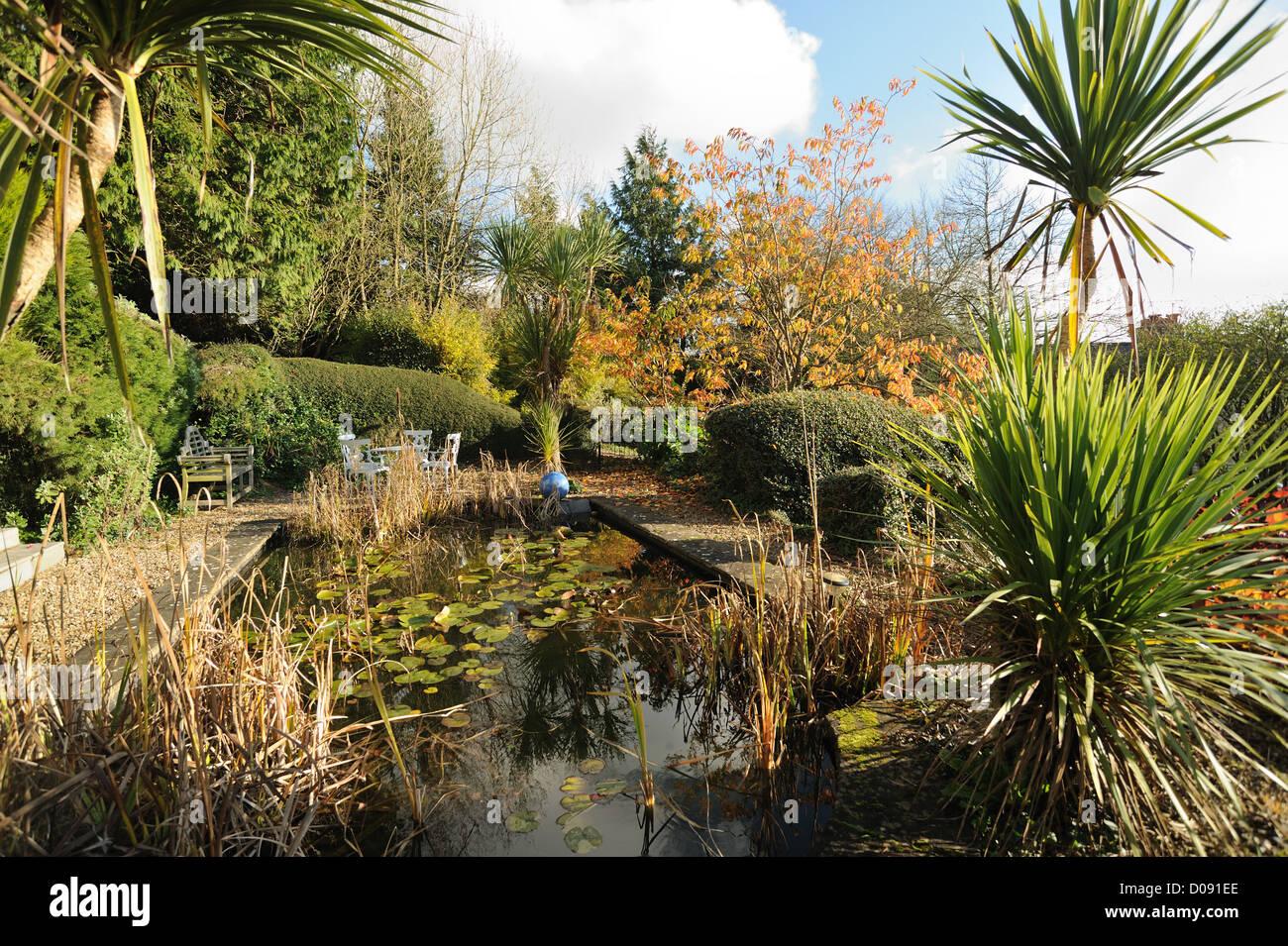 Torbay Palms und Gartenteich an einem schönen Herbsttag Stockbild
