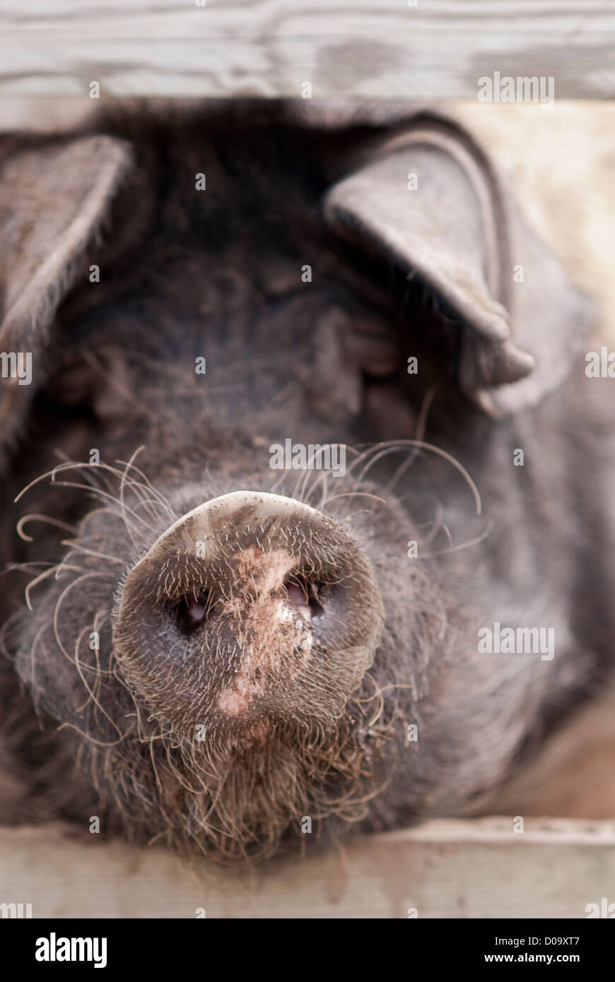 Look Through Fence Stockfotos & Look Through Fence Bilder - Alamy