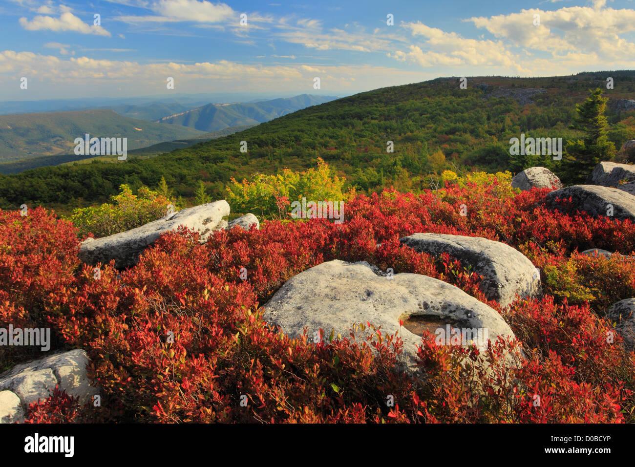 Bär-Felsen bewahren, Dolly Grassoden Wildnis, Hopeville, West Virginia, USA Stockbild