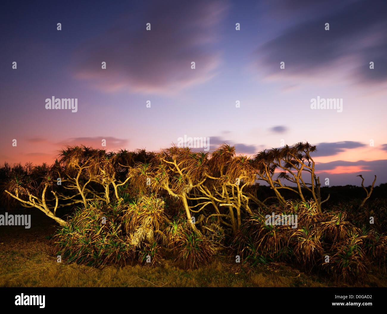 Tropische Pflanzen in der Abenddämmerung in Manzamo, Okinawa Stockbild