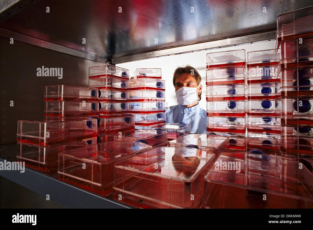 Ein Techniker überprüft Kulturen von gentechnisch veränderter Mikroorganismen. Stockbild