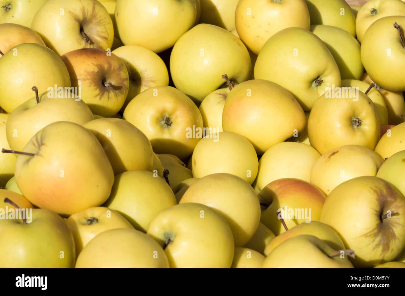 Frisch geerntete Golden Delicious Äpfel auf dem Display auf dem Markt Stockbild