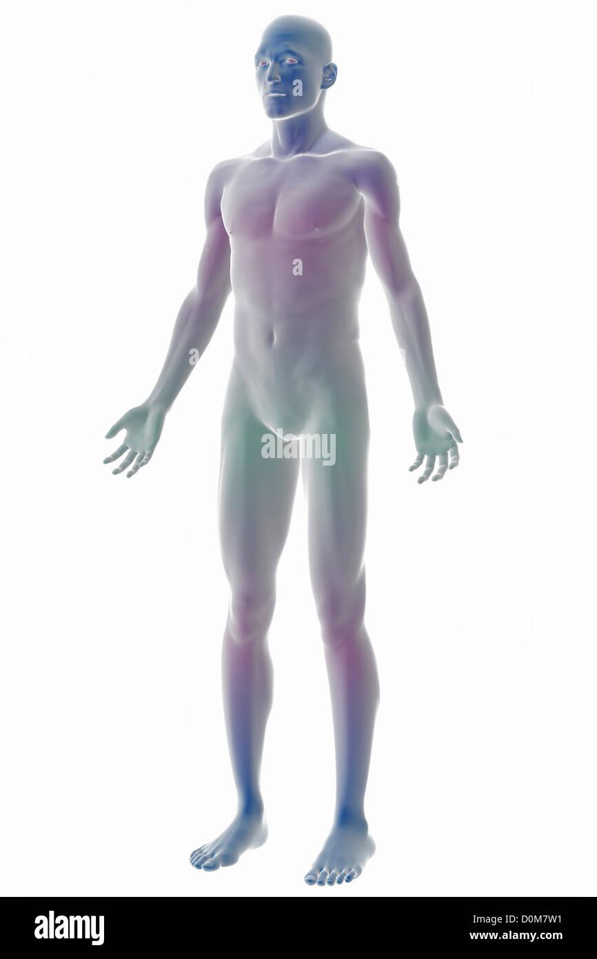 Stilisierte Ganzkörper Dreiviertelansicht der Oberfläche Anatomie ...