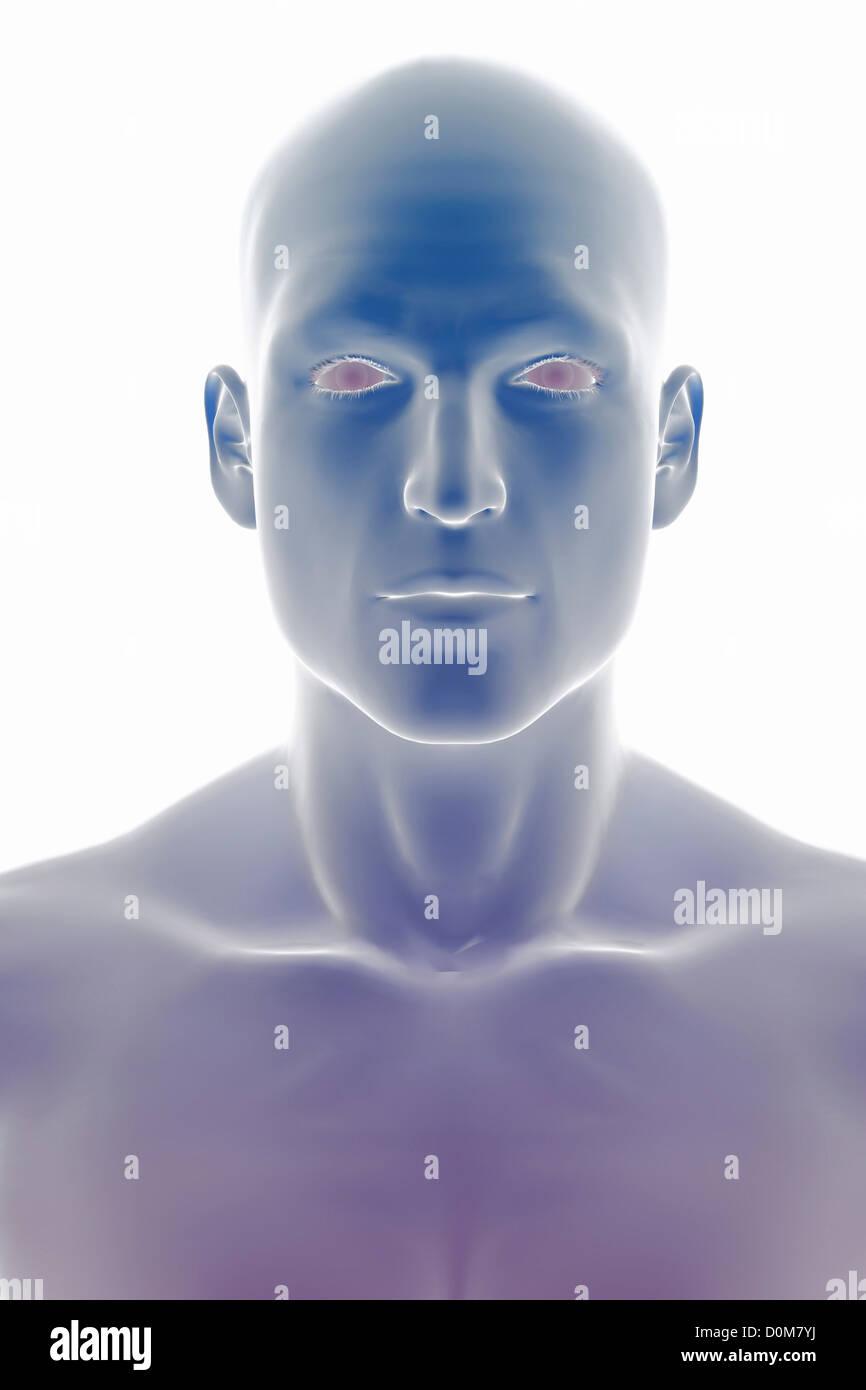 Stilisierte Frontalansicht der Oberfläche Anatomie von Kopf und Hals ...