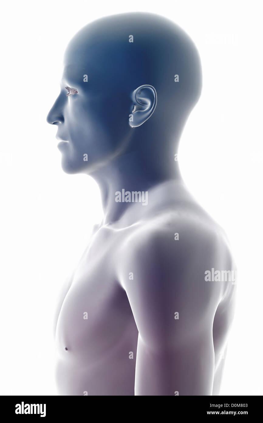 Stilisierte Seitenansicht der Oberfläche Anatomie des Kopfes und der ...