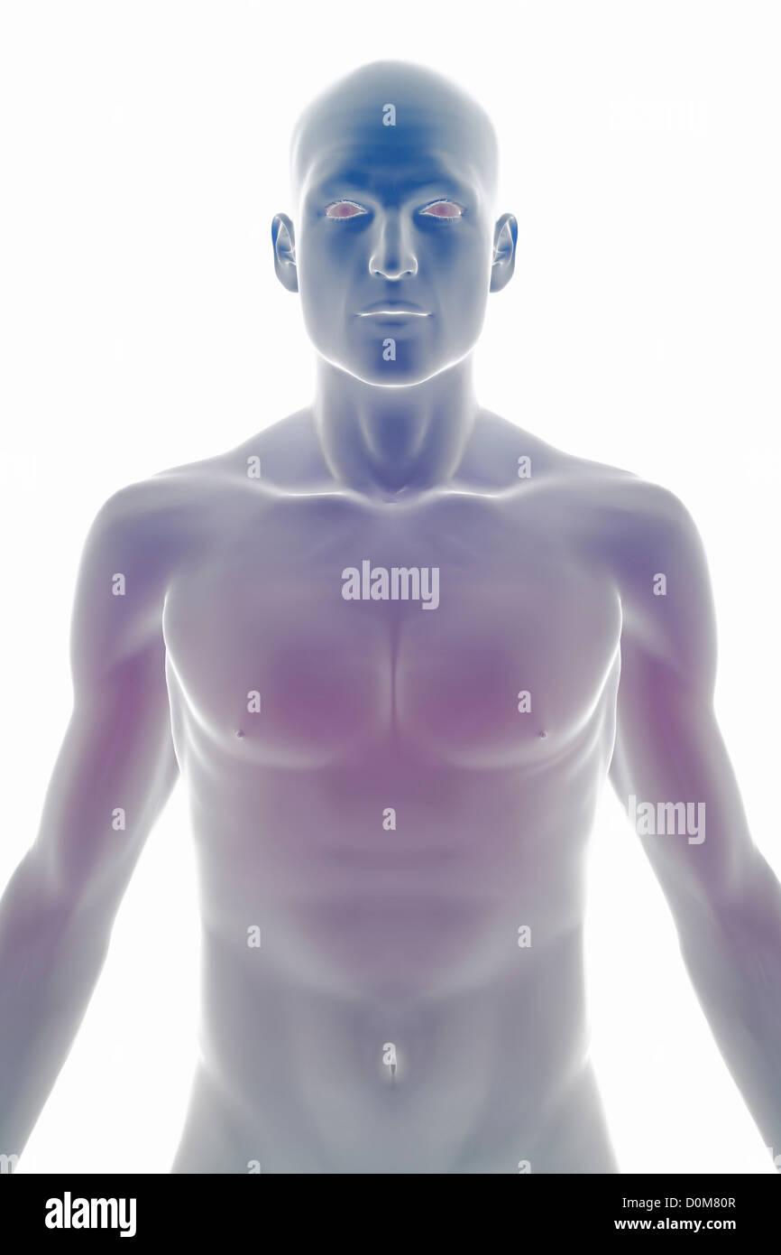 Stilisierte Frontalansicht der Oberfläche Anatomie des Kopfes und ...