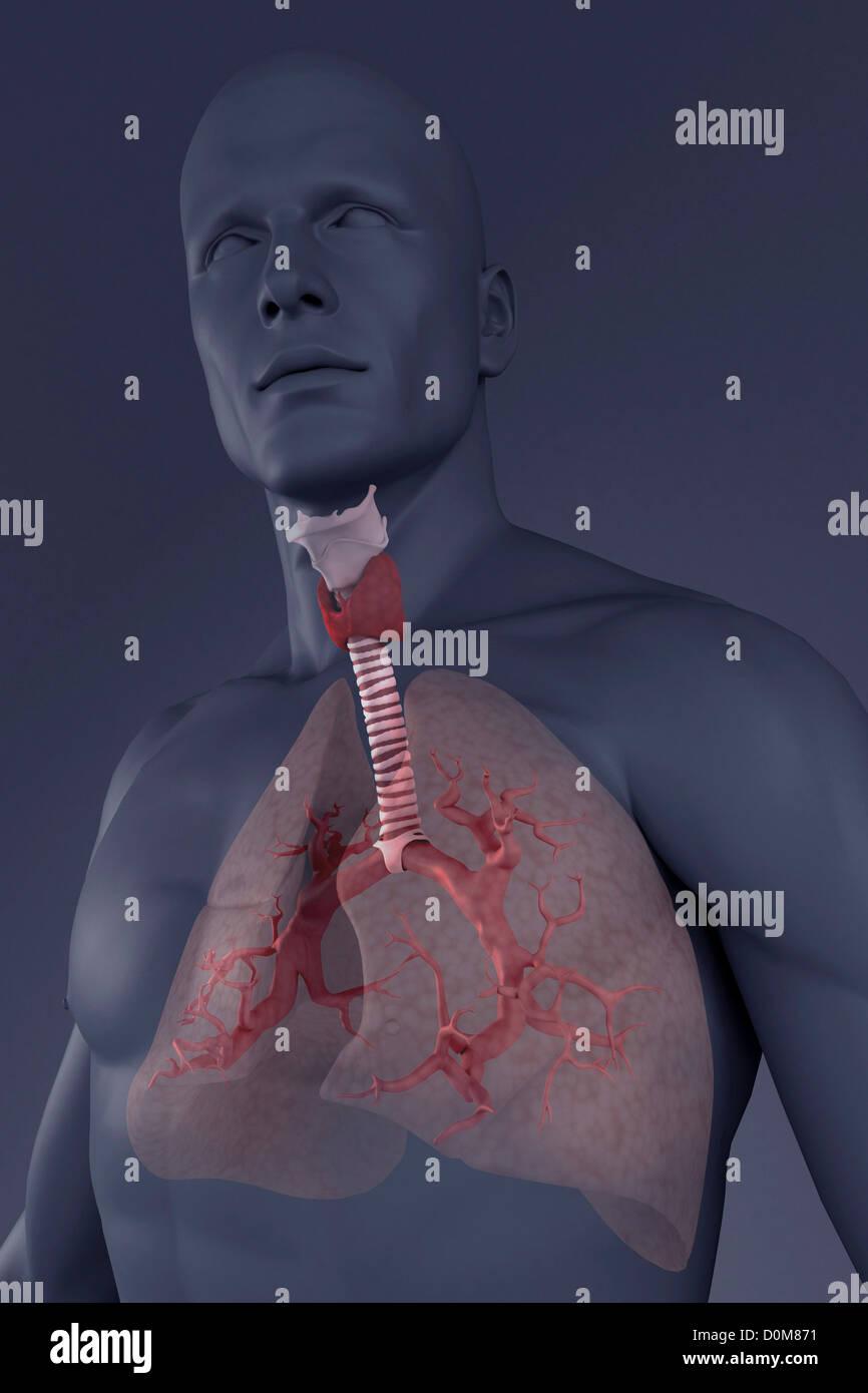 Großartig Appendix Stelle In Körper Fotos - Menschliche Anatomie ...