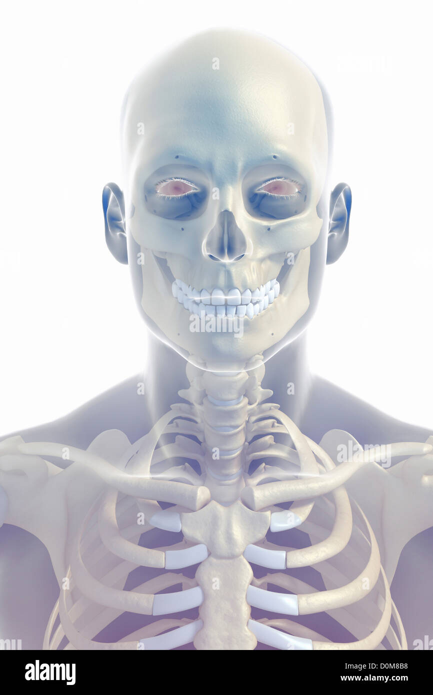 Groß Hals Knochen Fotos - Anatomie Und Physiologie Knochen Bilder ...