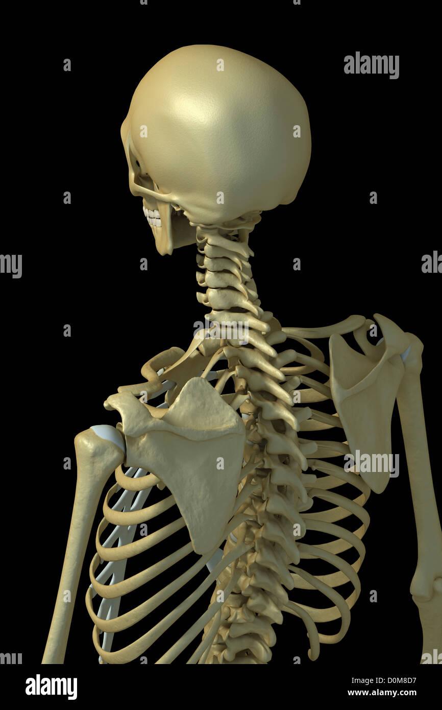 Fantastisch Anatomie Der Oberen Extremität Fragen Fotos ...