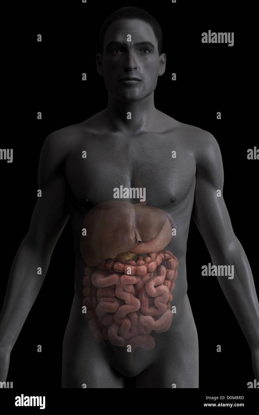 Charmant Bilder Von Innerhalb Des Menschlichen Körpers Fotos ...