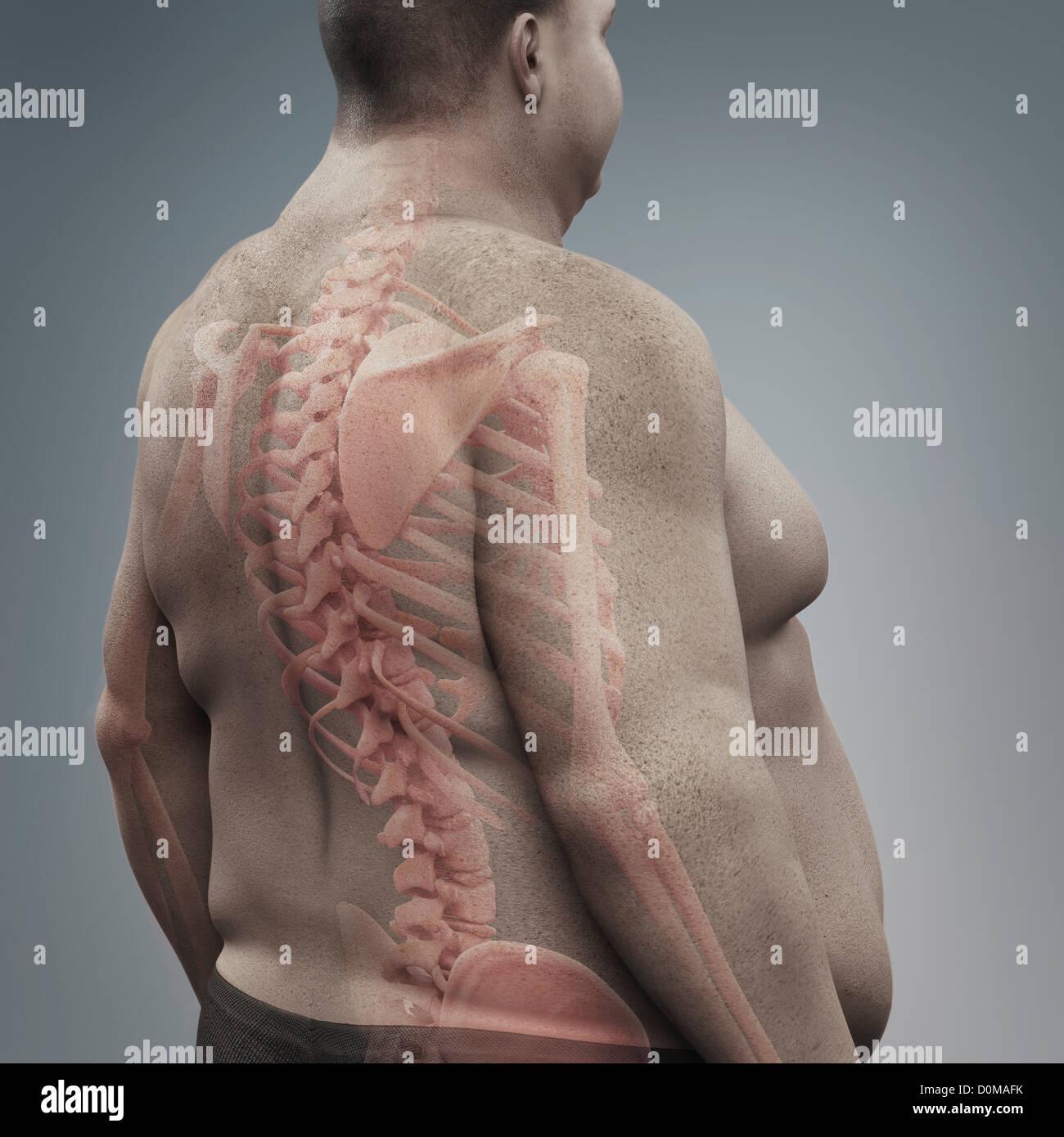 Charmant Struktur Des Skeletts Zeitgenössisch - Physiologie Von ...