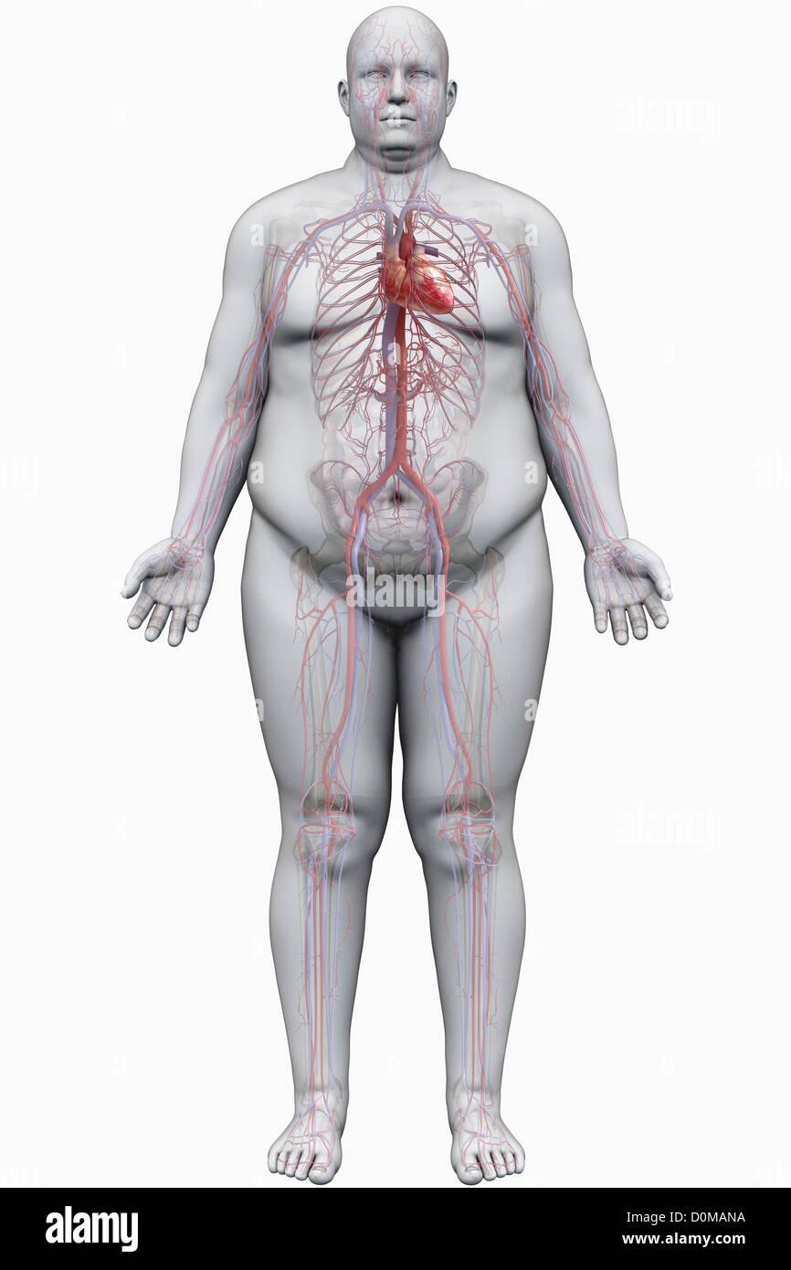 Atemberaubend Zeigen Körperanatomie Fotos - Anatomie Von ...