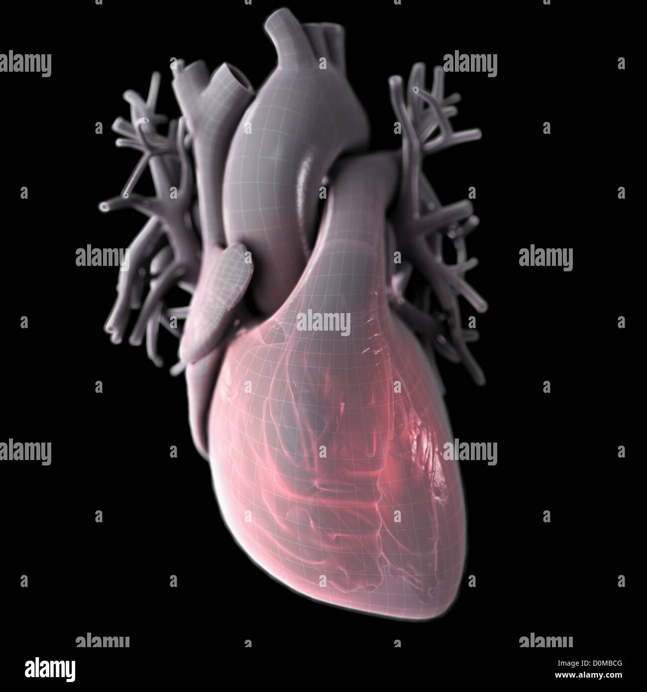 Berühmt Diagramm Eines Herzens Fotos - Menschliche Anatomie Bilder ...