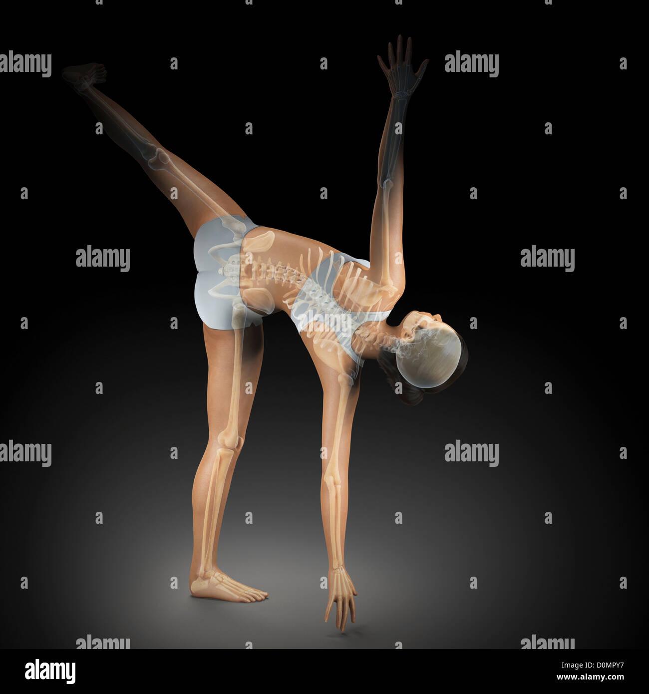Skelett über einen weiblichen Körper in Halbmond-Pose zeigt die Skelette Ausrichtung von diesem bestimmten Stockbild