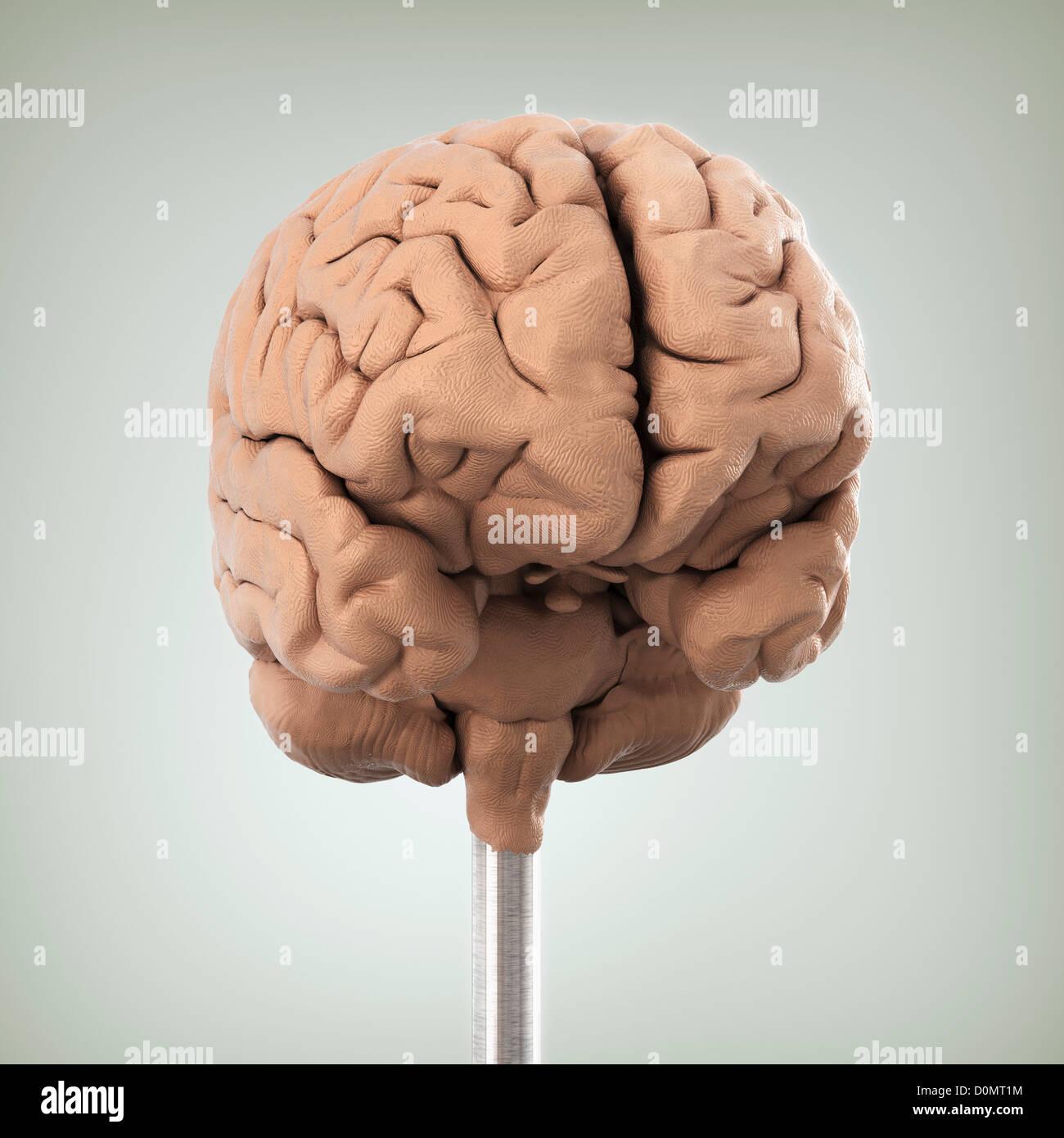 Wunderbar Gesichtsnerv Anatomie Animation Bilder - Anatomie Von ...