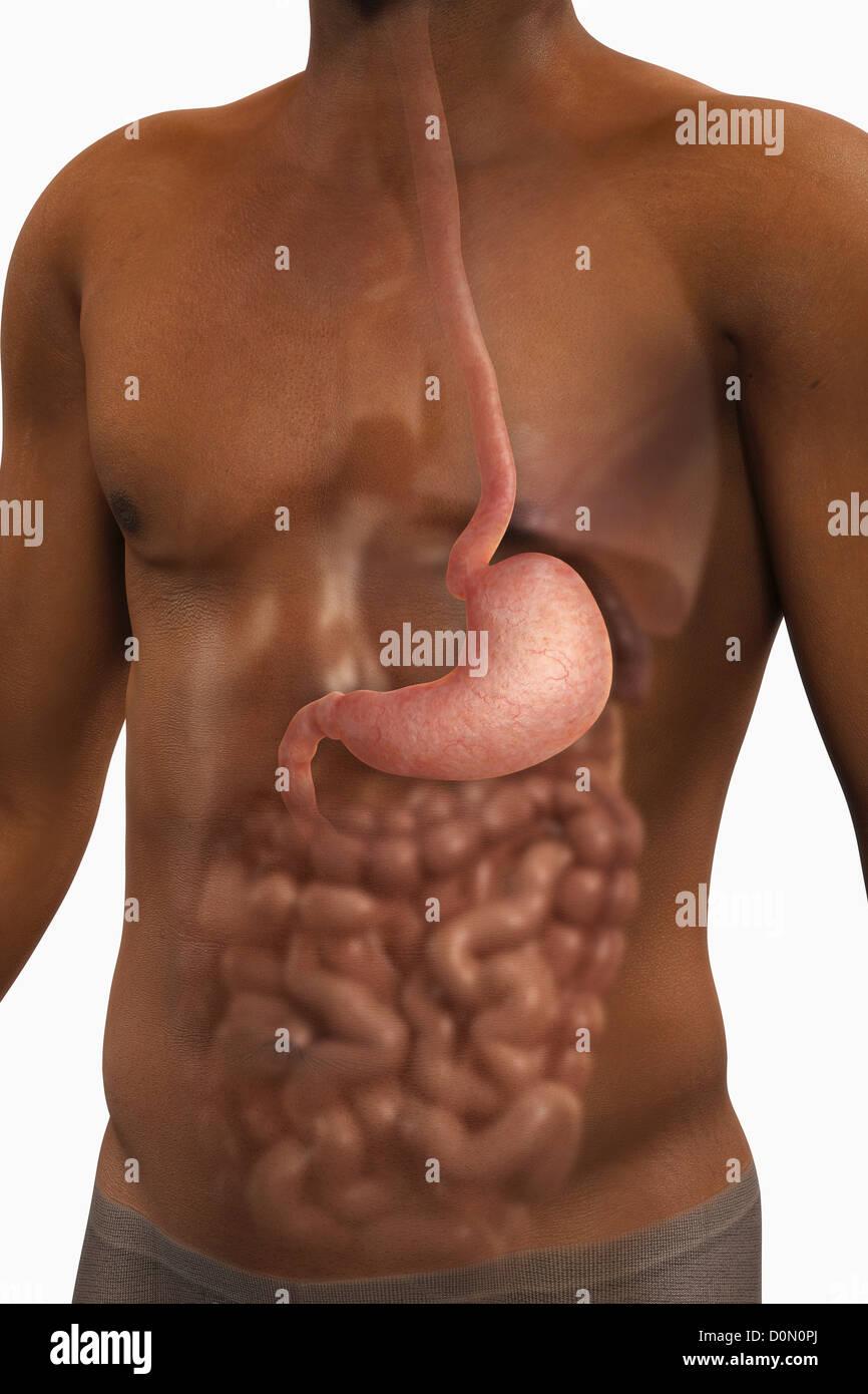 Ein Blick auf eine männliche Figur der Afrikaner zeigt die Anatomie ...