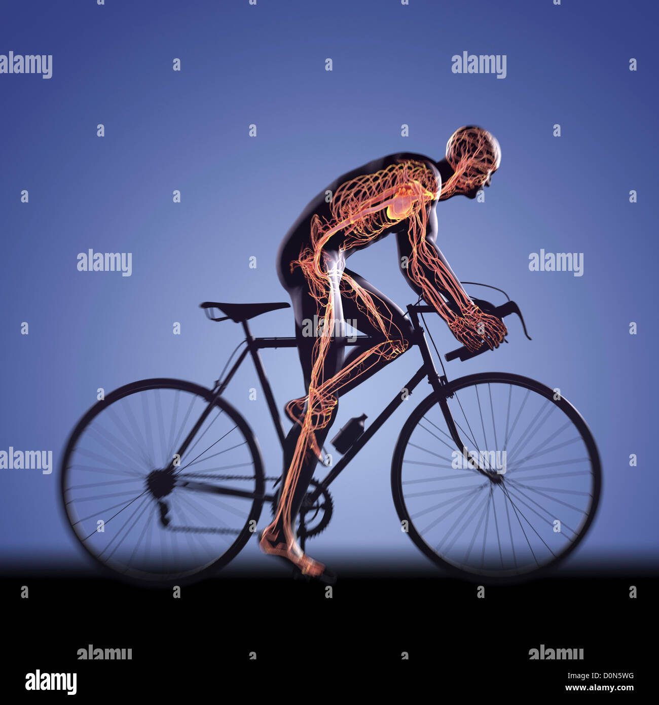 Male Figure Cycling Bicycle Internal Stockfotos & Male Figure ...