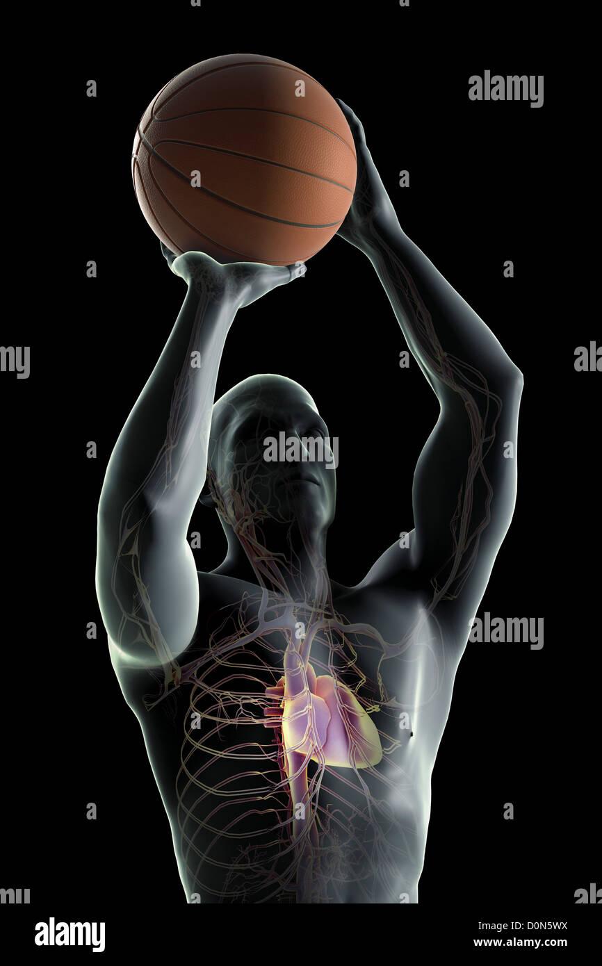 Fantastisch Anatomie Und Physiologie Noten Herz Kreislauf System ...