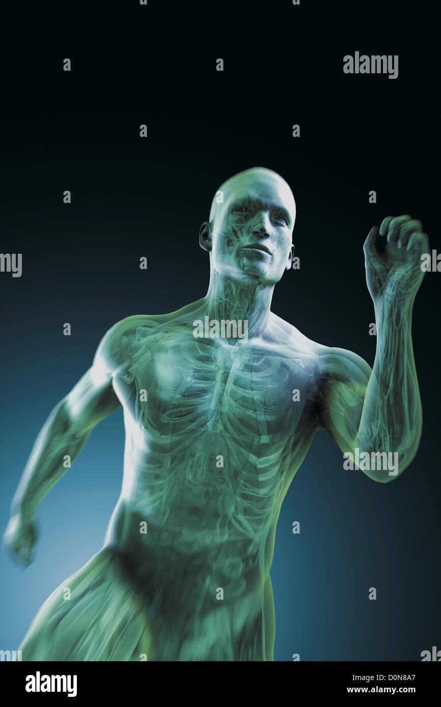 Ausgezeichnet Innerhalb Des Körpers Bilder - Menschliche Anatomie ...