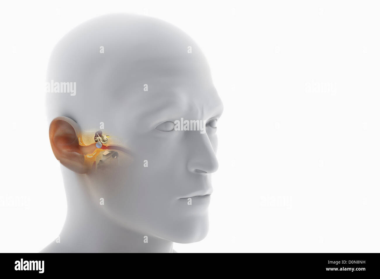 White Inner Ear Stockfotos & White Inner Ear Bilder - Alamy