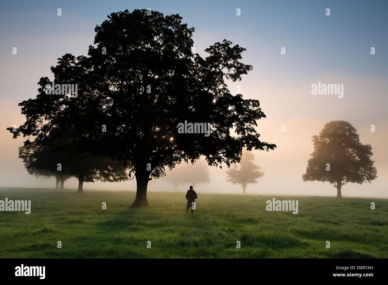 Ein Fotograf in einem Feld an einem nebligen Morgen in der Nähe von Milborne Port, Somerset, England, UK Stockbild