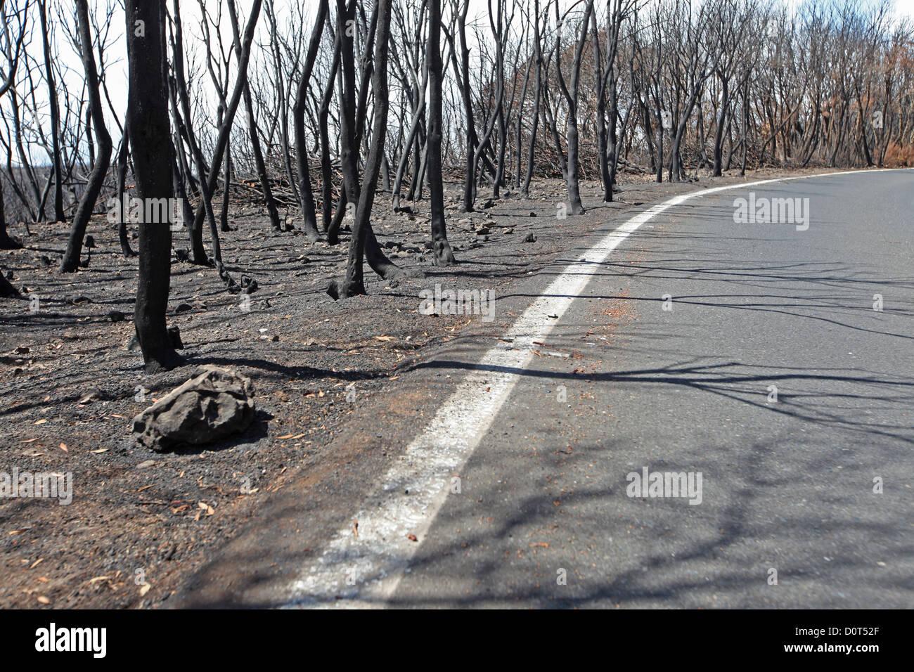 Verbrannte Bäume Feuer einige Tage nach dem Wald im Jahr 2012 in den Lorbeerwald der Garajonay Nationalpark Stockbild