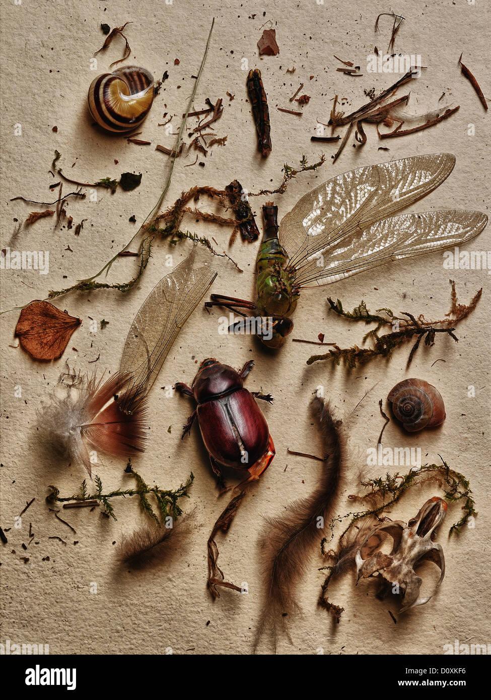 Insekten und andere Elemente aus der Natur Stockbild