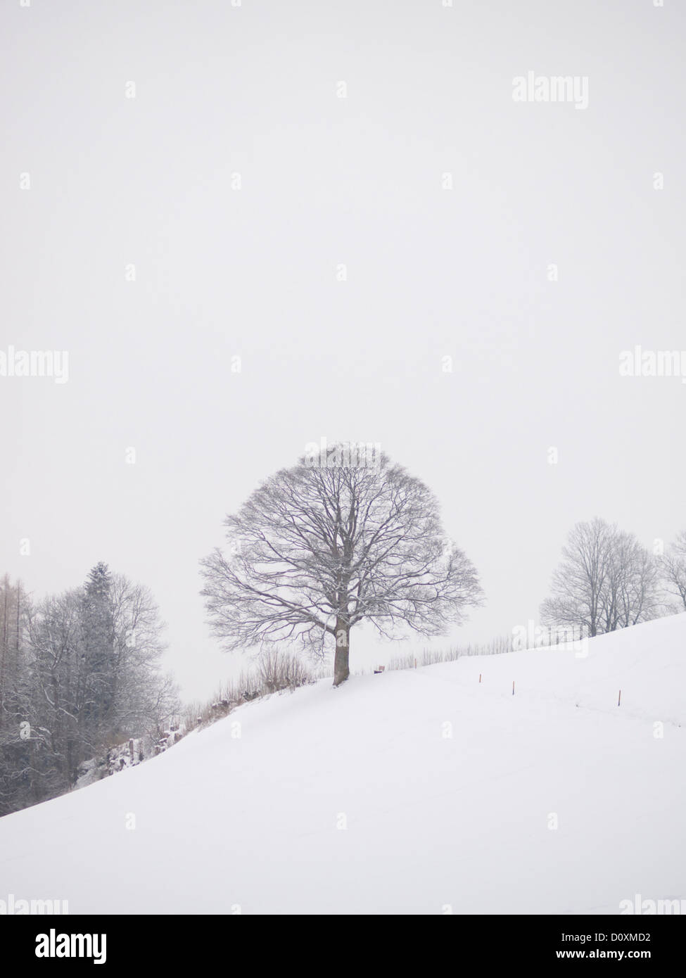 Appenzell, Ausserrhoden, Baum, Bäume, Strauch, Busch, Sträucher, Büsche, Nebel, hochrangige Nebel, Stockbild