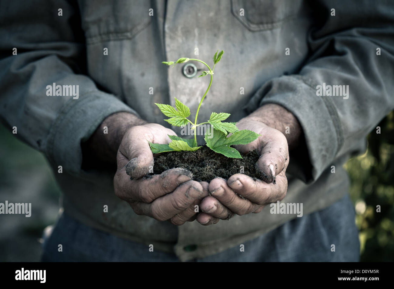 Mannhände halten eine grüne junge Pflanze Stockbild