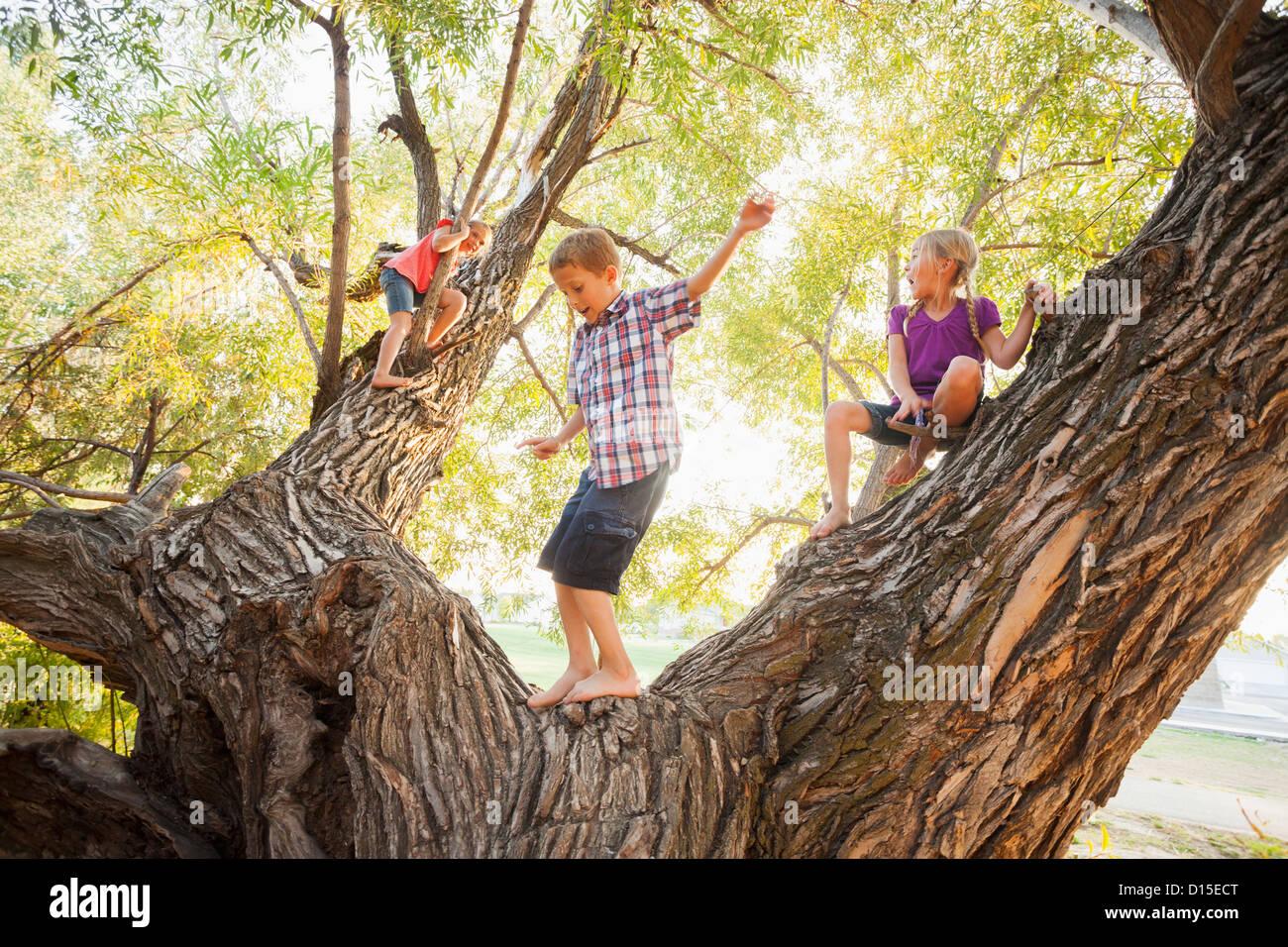 USA, Utah, Lehi, drei Kinder (4-5, 6 und 7) spielen in riesigen Baum Stockfoto