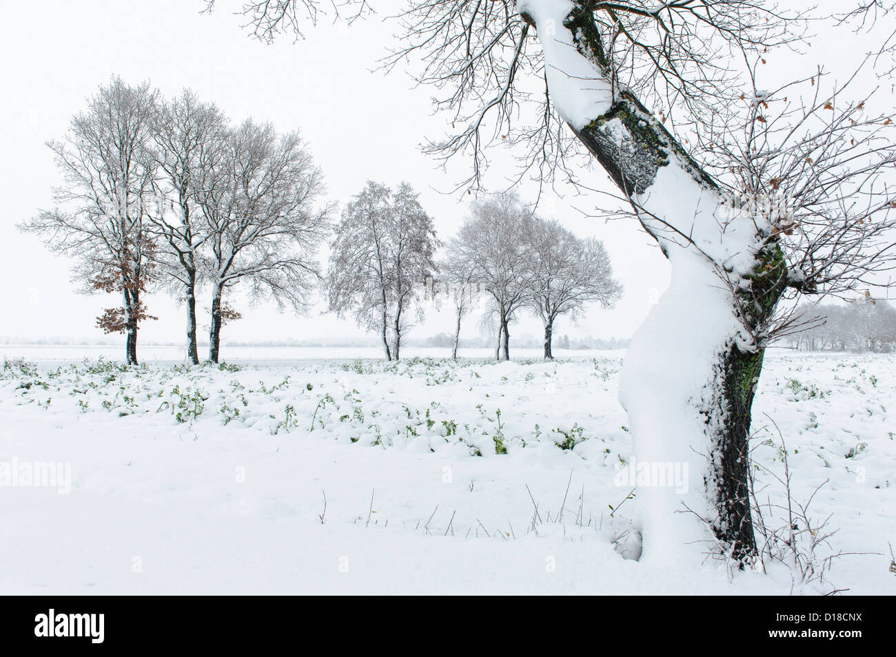 Winterlandschaft, Niedersachsen, Deutschland Stockbild