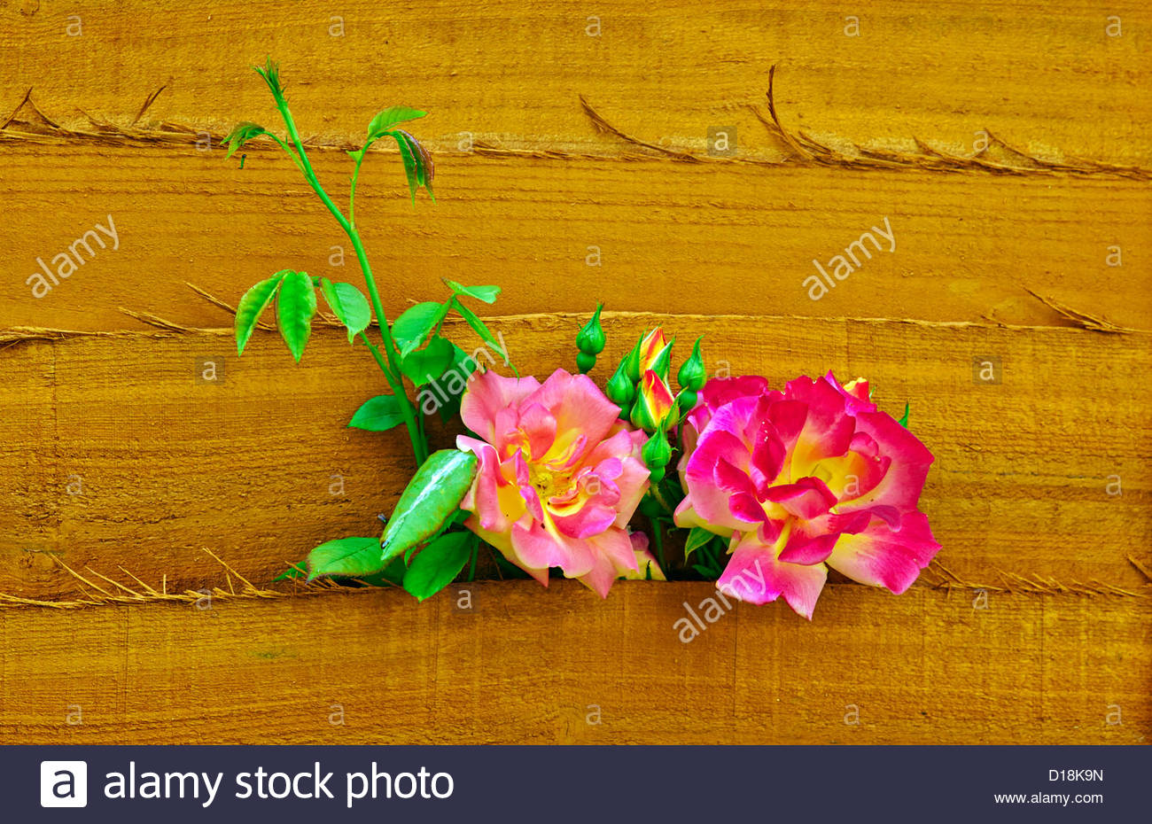Gartenzaunlatten Holz