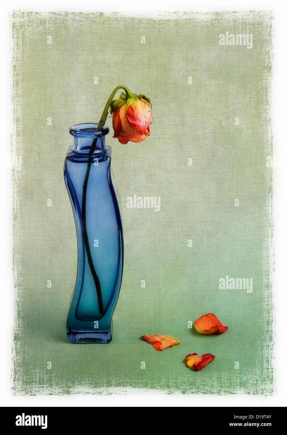 rote Rosen in blauer Vase mit Textur-overlay Stockbild