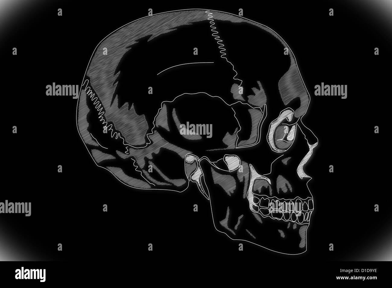 Menschlicher Schädel-Struktur Stockfoto, Bild: 52538962 - Alamy