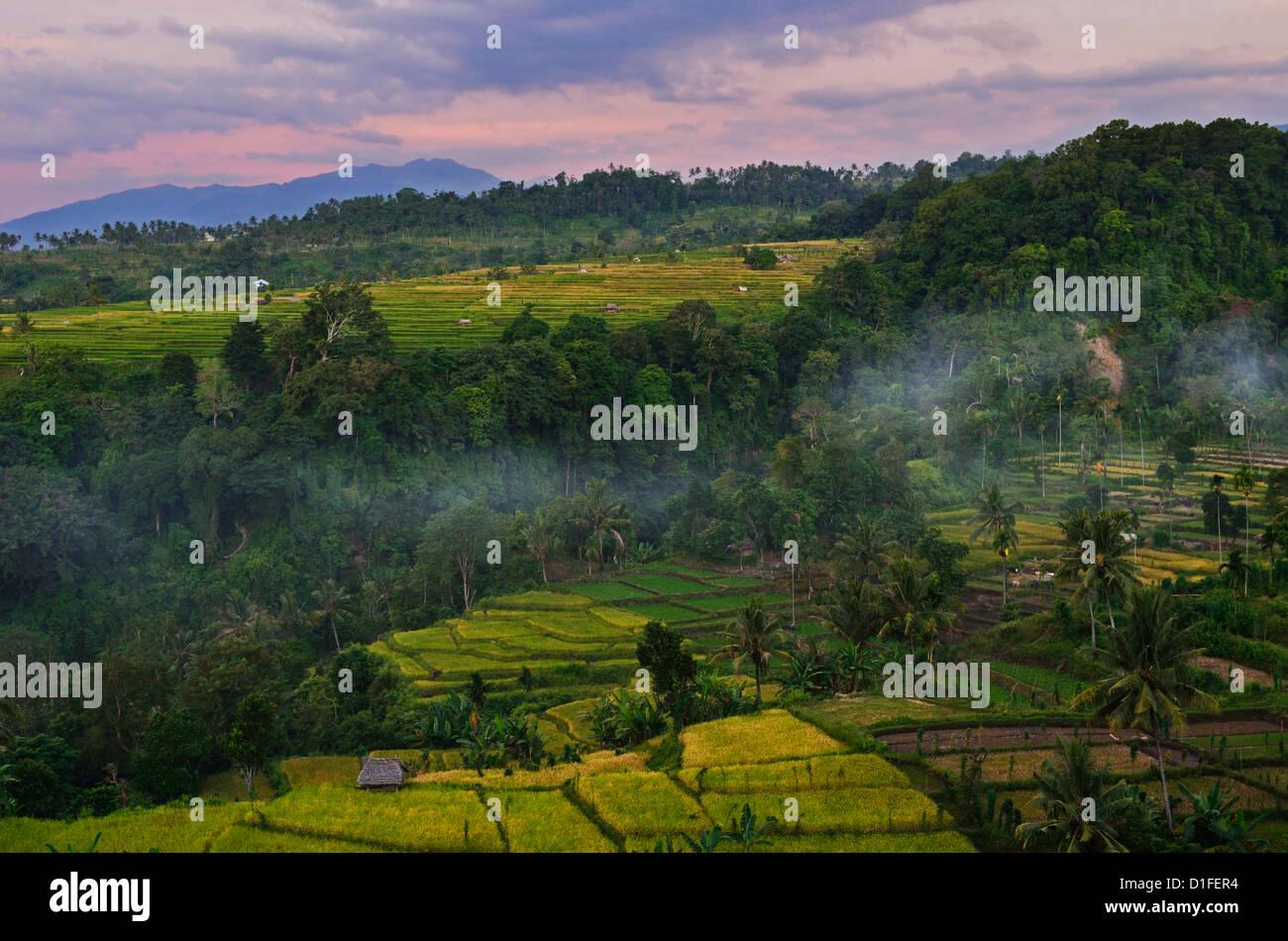 Regenwald und Felder, Senaru, Lombok, Indonesien, Südostasien, Asien Stockbild