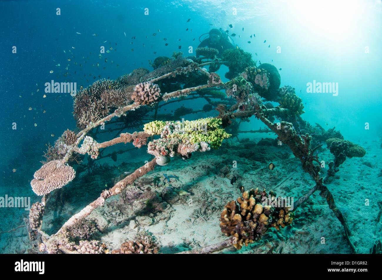 Korallen verkrustet Biosphäre im Meeresschutzgebiet Gangga Island, Sulawesi, Indonesien, Südostasien, Stockbild