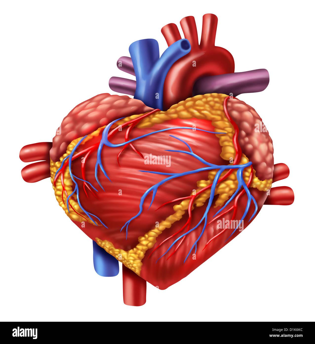 Menschlichen Herzens in Form einer Liebe-Symbol mit der Orgel von ...