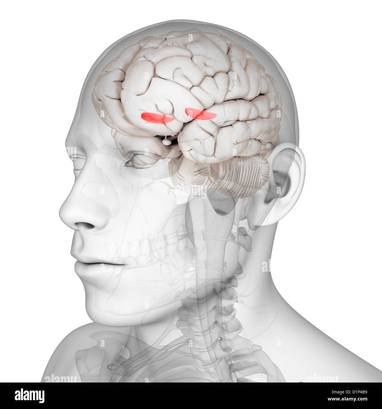 Brain Side Stockfotos & Brain Side Bilder - Seite 43 - Alamy