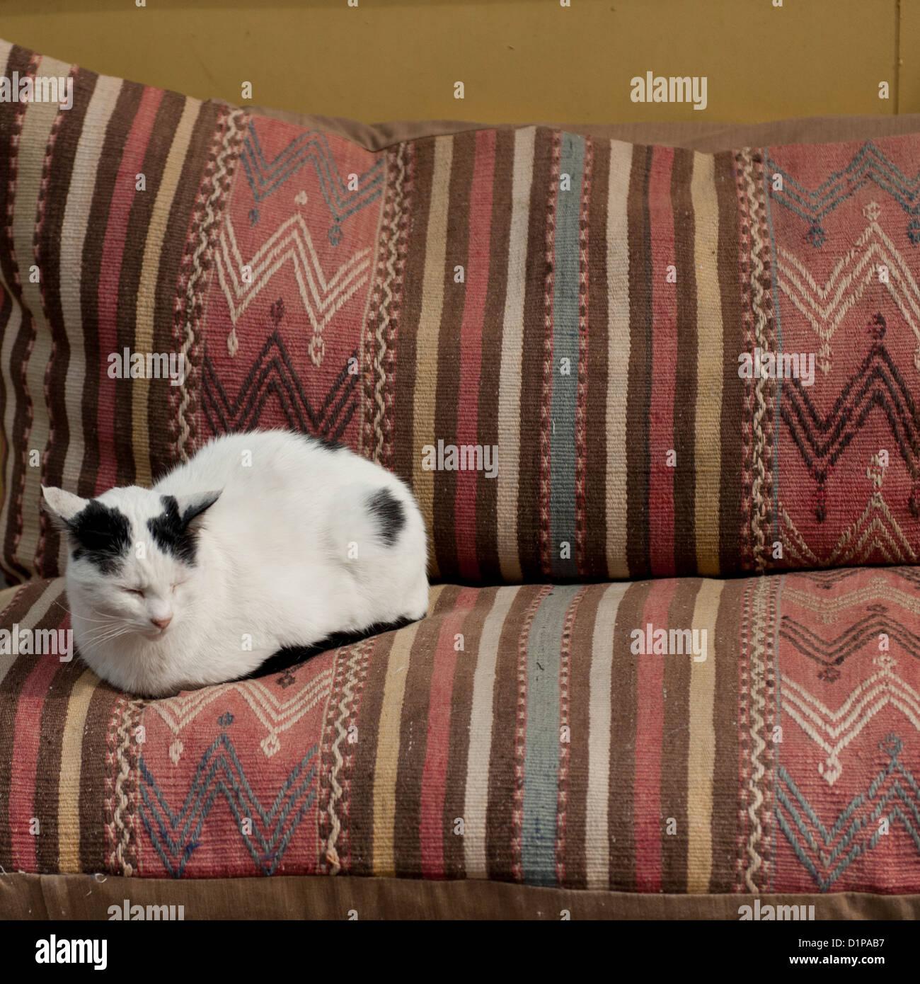 Katze sitzt auf einer Couch, Istanbul, Türkei Stockbild