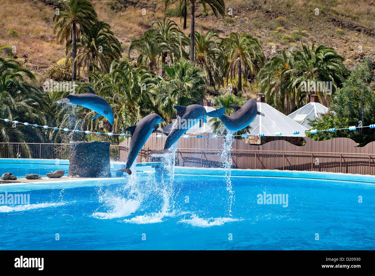 Delphin show im Palmitos Park, Maspalomas, Gran Canaria, Kanarische Inseln, Spanien, Europa Stockbild